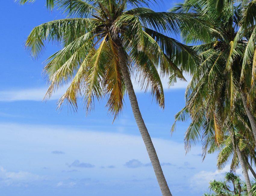 atoll-2178747