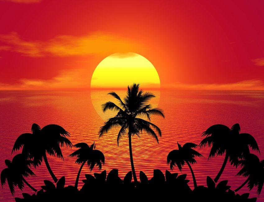 tropical-1651426